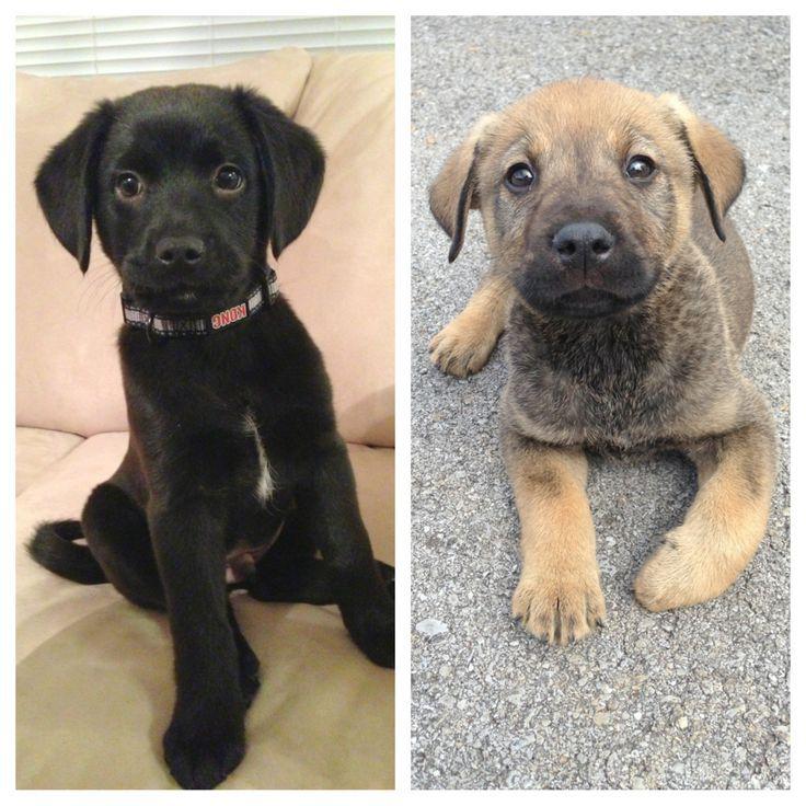 Как узнать породу собаки по фото, как определить породистый щенок или нет?