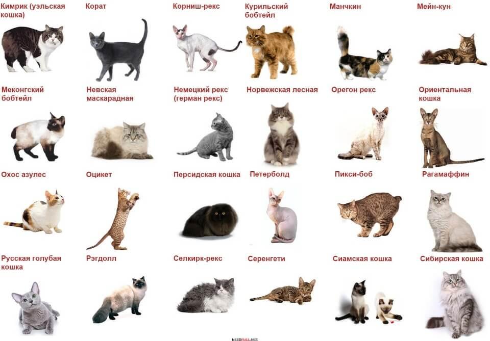 Как выбрать кличку для котенка: мальчика или девочки, с учетом характера, окраса и других критериев
