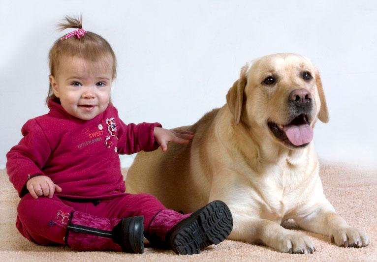 Какую собаку завести в квартире с детьми и кошкой