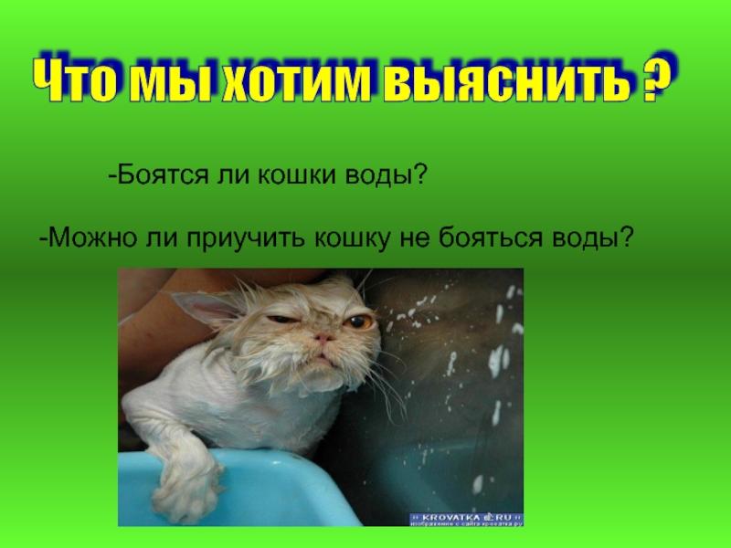 Кошка внезапно стала боятся: причины, как помочь