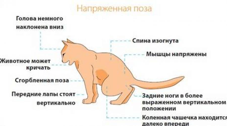 Затруднение дефекации или запор у собаки или кошки