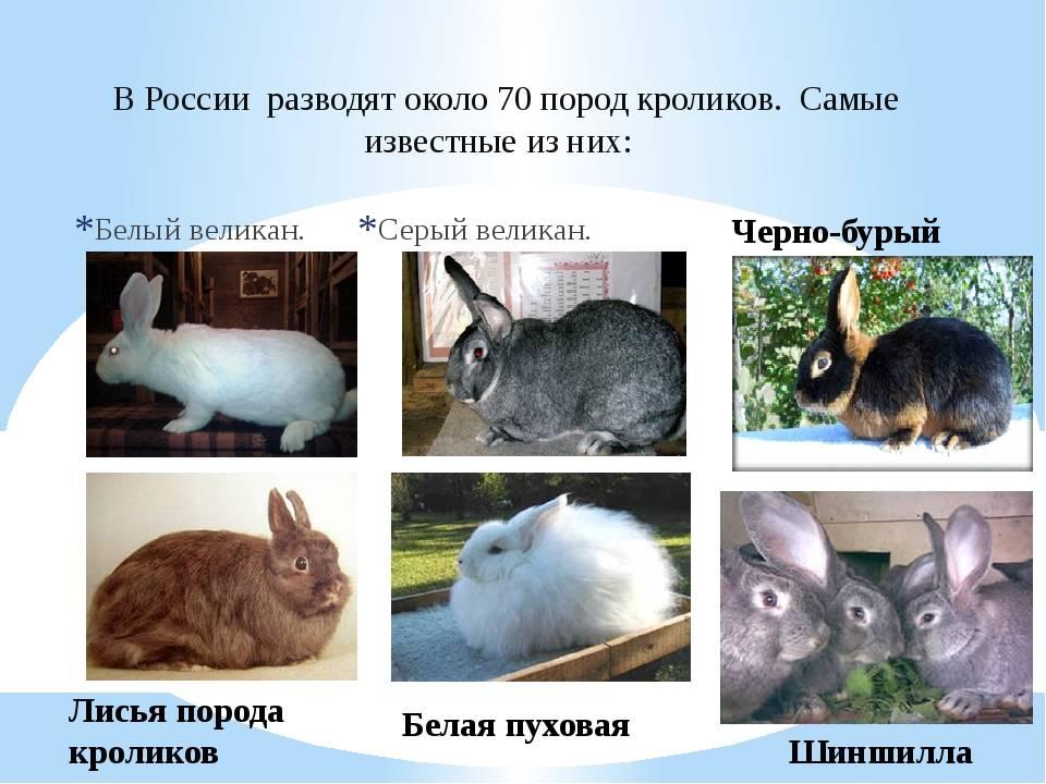 Сколько живут декоративные кролики в домашних условиях и как продлить срок жизни питомцу