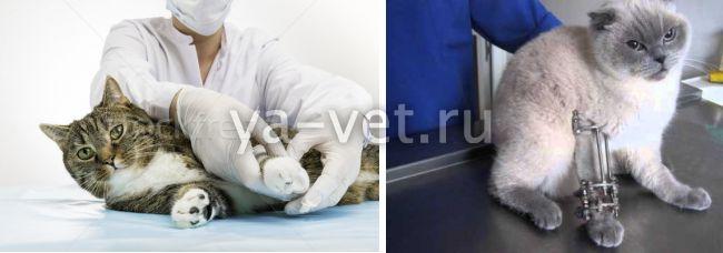 Что делать если у кота сломан хвост?