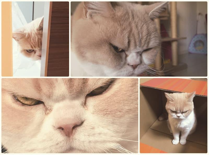 Кошка таскать котят с места на место - 5 методов как отучить