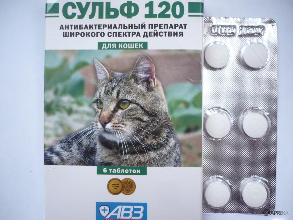 Лучшие средства от гуляния кошек на 2021 год
