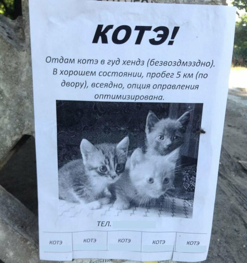 Как воспитывать котенка: советы экспертов о правильном воспитании котенка