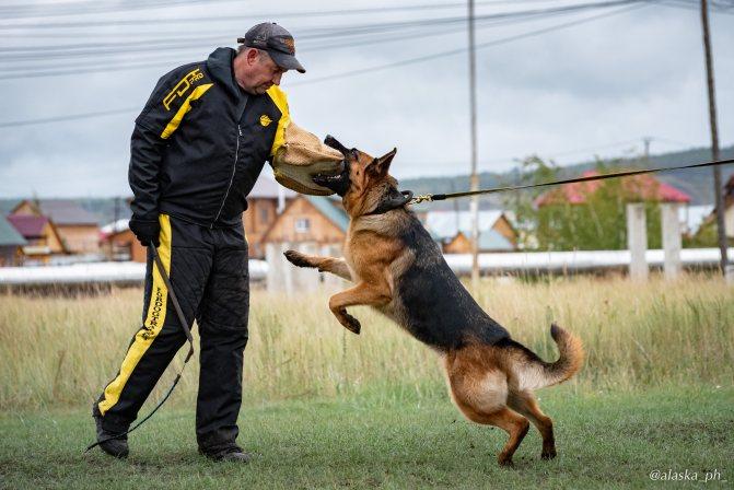 Как научить собаку команде «лежать»: 4 способа дрессировки, в каком возрасте начать, как избежать ошибок