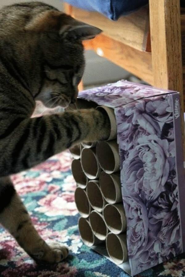 Как успокоить кошку: советы опытного хозяина
