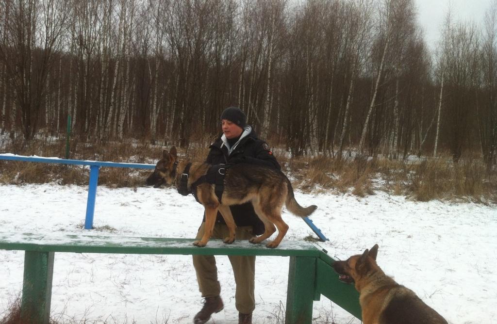 Курс угс для собак: управляемая городская собака, статус курса, 8 команд, экзамены, можно ли натренировать собаку самостоятельно