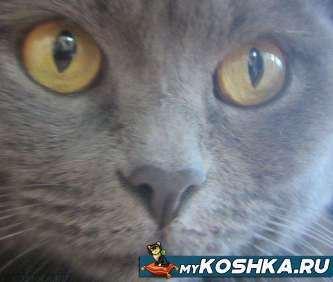 Беспокойство у кошки: причины и признаки