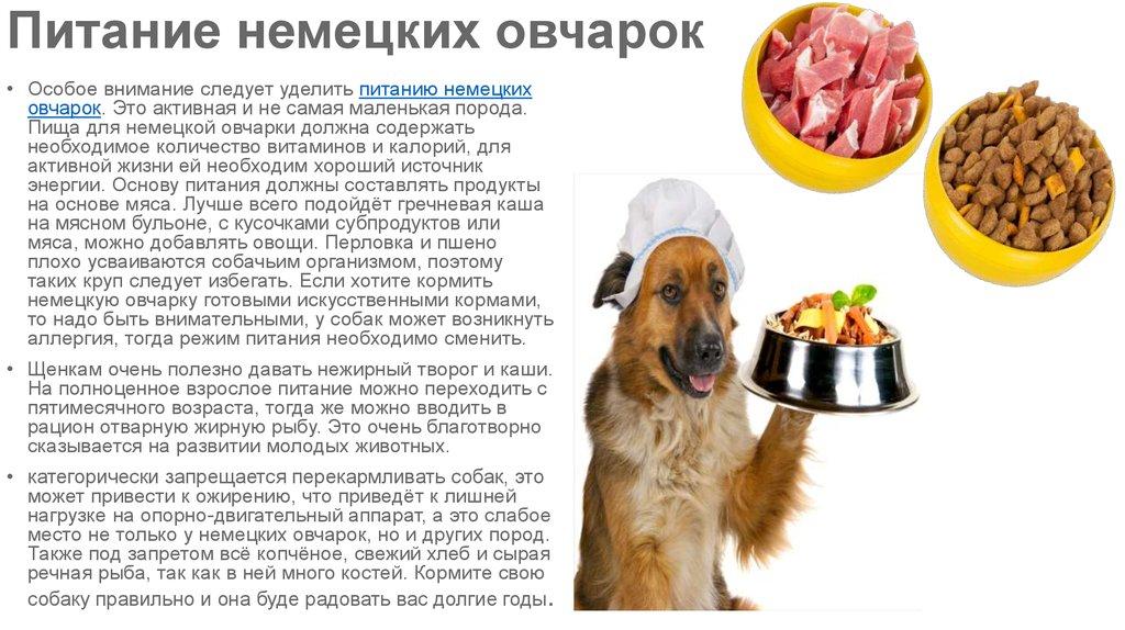 Натуралка для собак: 20 рецептов на каждый день