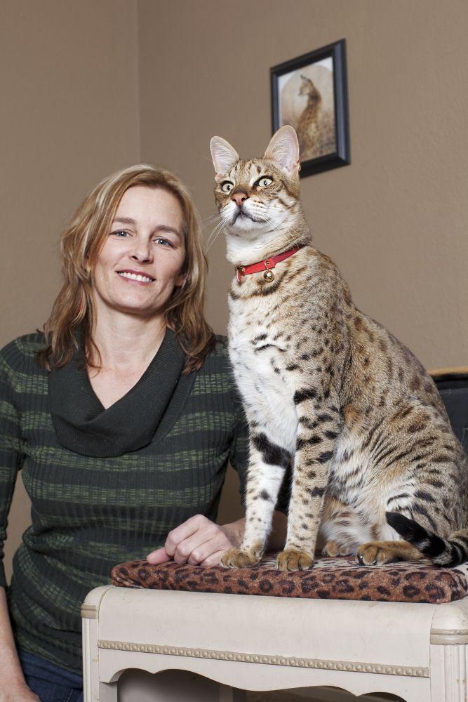 Самые большие кошки: названия пород c фото, информация о них