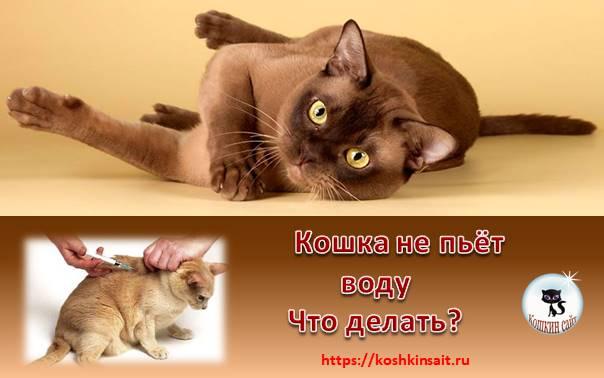 Кошка не пьет воду.