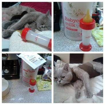 """Как помочь коту в стрессе   блог ветклиники """"беланта"""""""