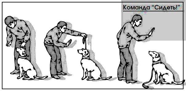 Как дрессировать собак в домашних условиях – пошаговые инструкции и подборка полезных видео, 2 часть