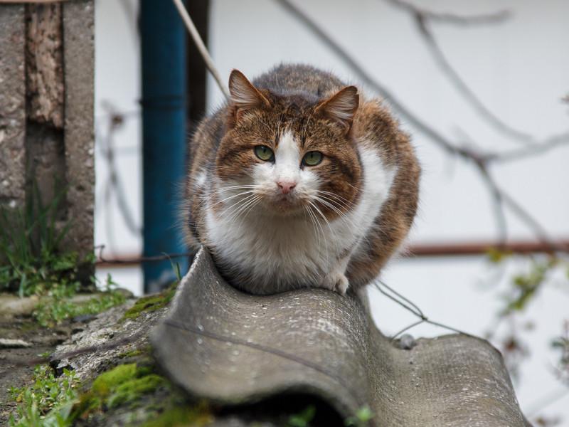 Дикий лесной кот: как содержать в неволе