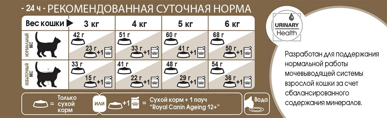 Сколько раз кормить котенка в 1, 2, 3, 4, 5 и 6 месяцев: норма кормления, описание правильного рациона питания