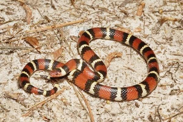 Змеи как домашние питомцы: сложно ли содержать змей?
