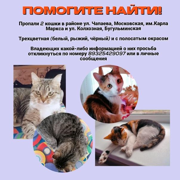 Приметы и суеверия, связанные с кошками черепахового окраса в доме: верно ли, что трехцветные питомицы приносят счастье?