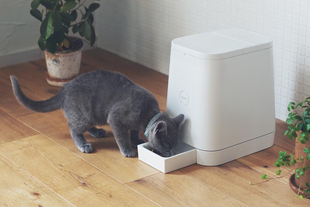 Автоматические кормушки для кошек: виды, правила выбора и изготовление