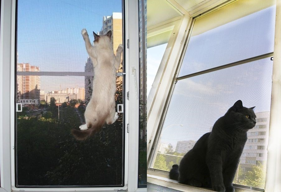 Кошка в доме – народные приметы и суеверия