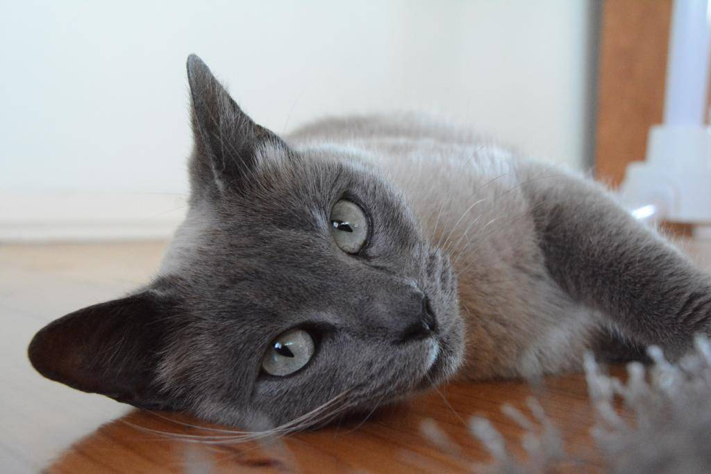 Как назвать черного котенка: красивые клички в честь кумиров, с акцентом на черный цвет +видео и фото