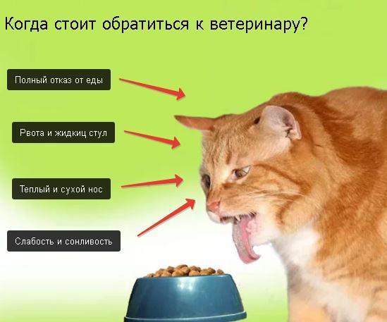 Сколько кошки могут прожить без еды и воды: как долго животное может не есть