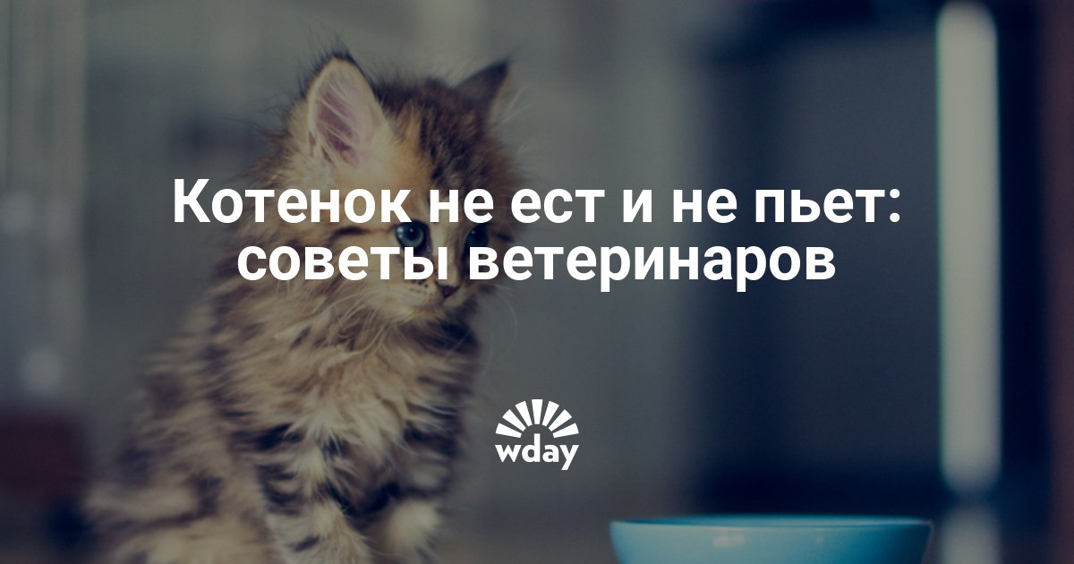 Как кошки переносят жару, если кошка плохо переносит жару