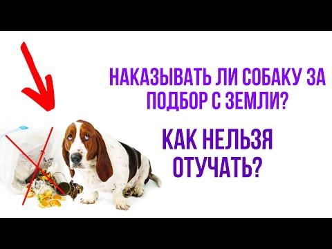 Как правильно наказывать собаку или щенка: лояльные и безопасные методы