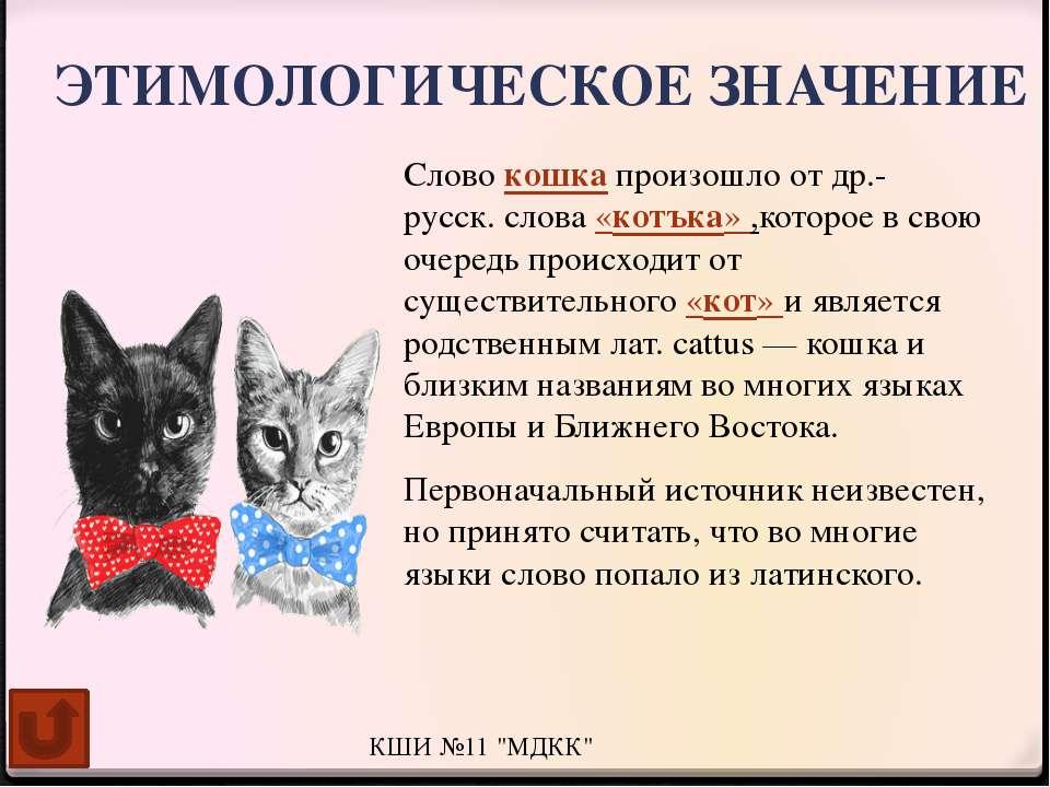 Популярные окрасы кошек