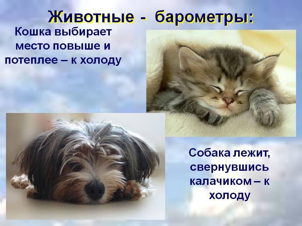Животные-предсказатели погоды, как определить прогноз по кошке или собаке