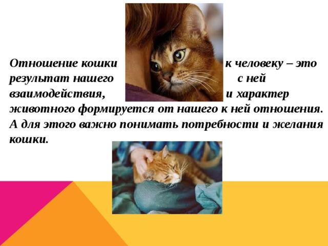 Лечат ли кошки людей: влияние кошек на здоровье хозяев и какие болезни умеют лечить (кототерапия)