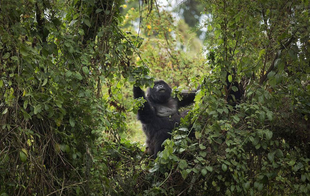 Антилопа — описание, места обитания, классификация + 72 фото