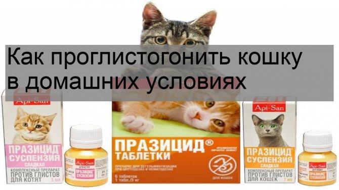 """Как правильно глистогонить котёнка с помощью препарата празител   нпк """"скифф"""""""
