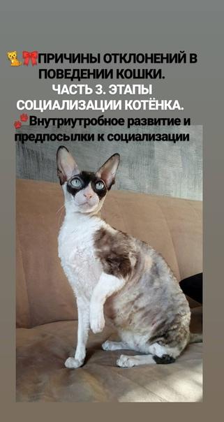 Причины агрессии у кошек и собак