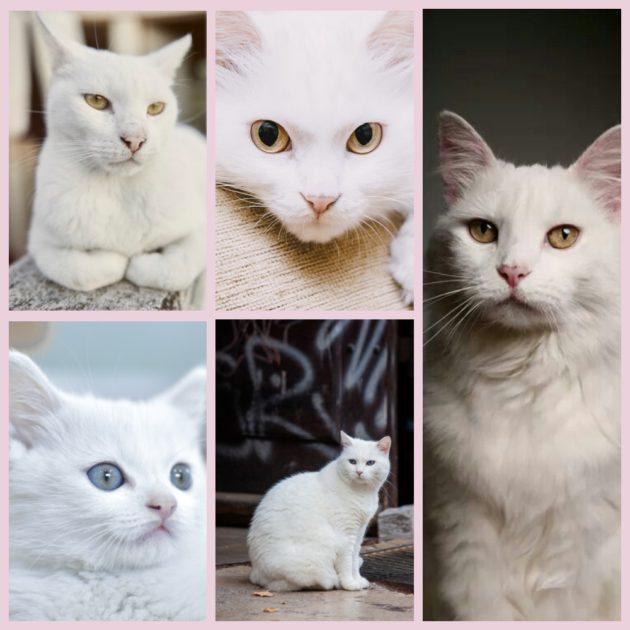 ???? как понять, глухая кошка или нет - симптомы, виды и диагностика