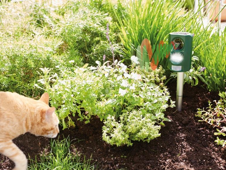 Как отвадить кошек от участка? какой запах не любят кошки? отпугиватель кошек :: syl.ru