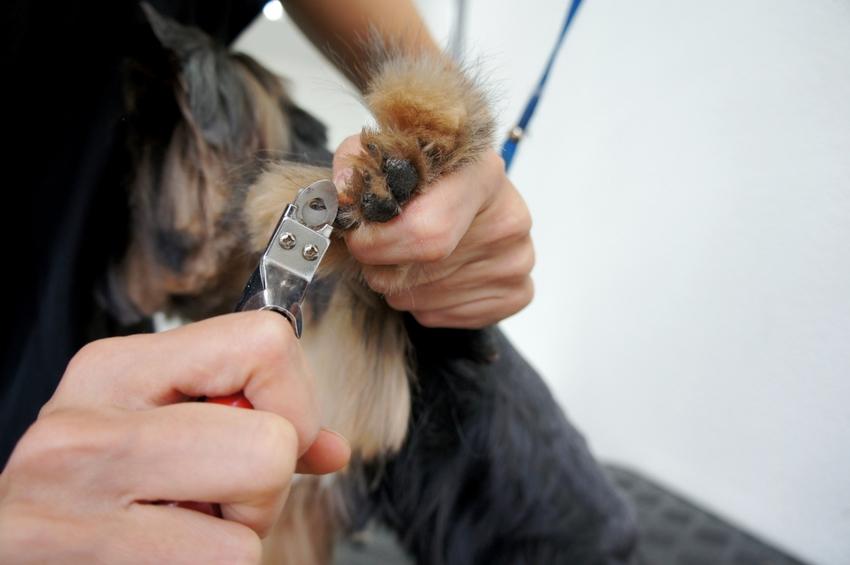 Стрижка когтей собаке: 4 этапа домашней процедуры