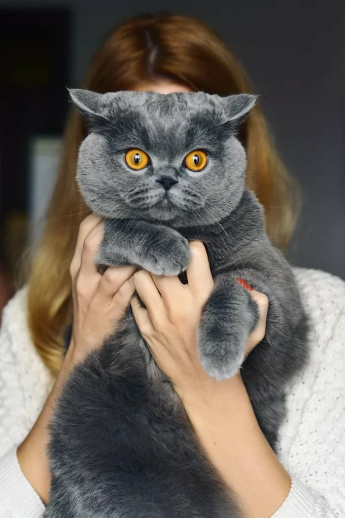 Топ-30 самых умных и сообразительных пород кошек в мире