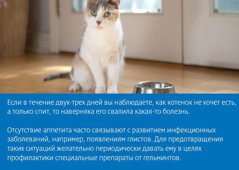 Кошка не ест и не пьет, постоянно лежит