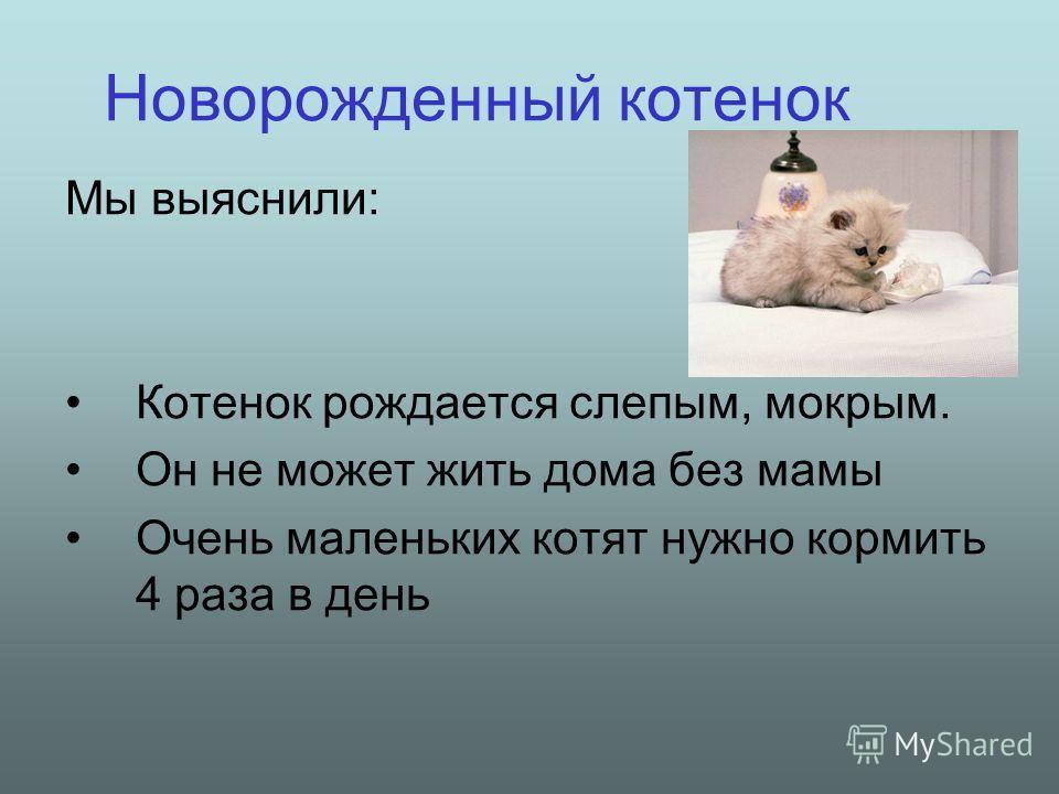 Сколько кошка может прожить без воды и еды - животный мир