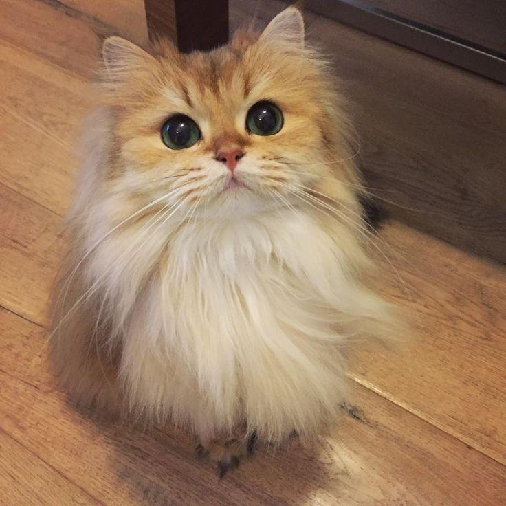Самый красивый котенок - 30 фото