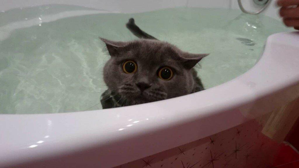 Почему кошки не любят воду