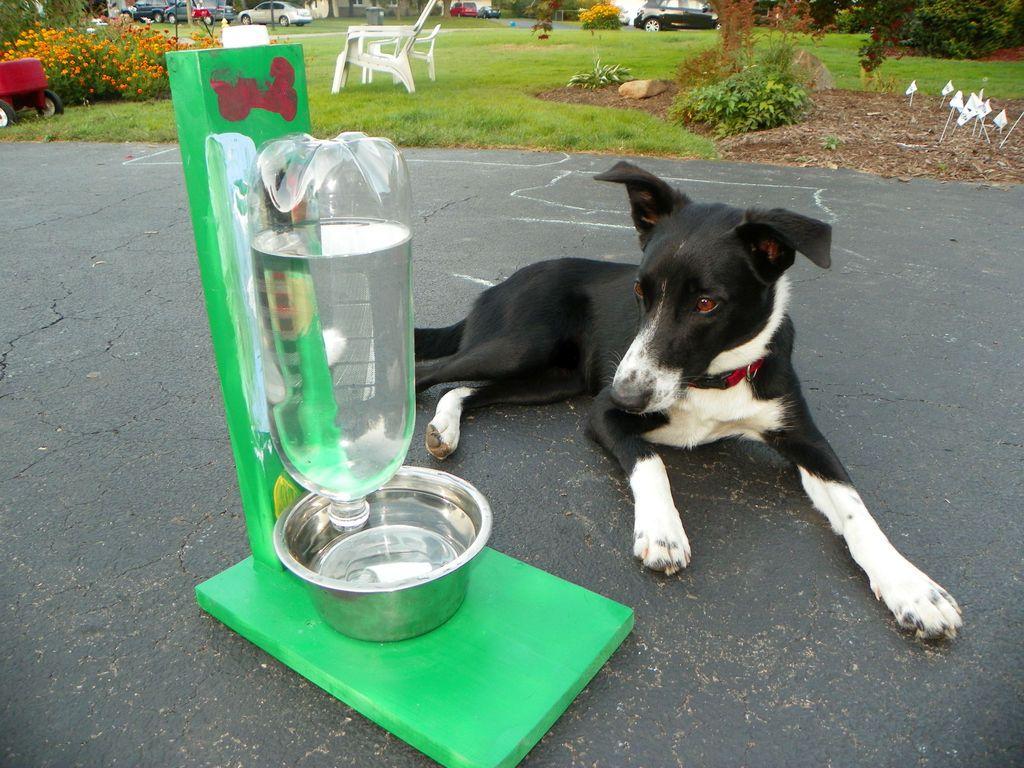 Автопоилка для собак: для крупных и мелких пород, фото и принцип действия. автоматические поилки drinkwell platinum и feed ex.