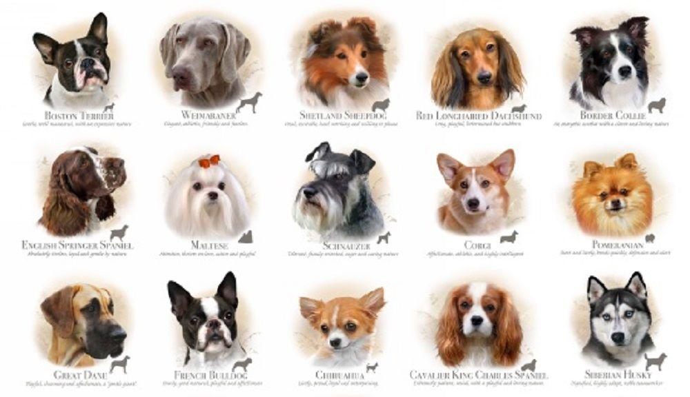 Собаки у которых выпадают глаза фото