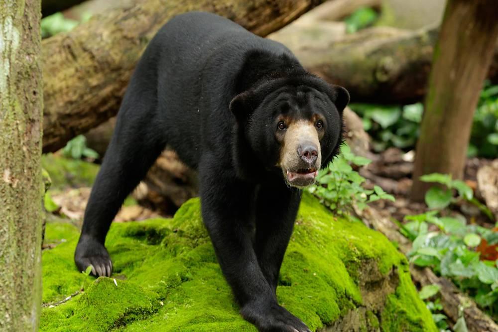 Виды медведей. фото, описание.