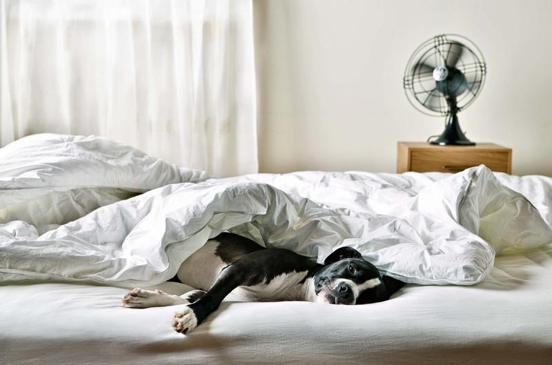 Как отучить собаку спать на кровати? – про собак от а до я на glamour-dog.ru