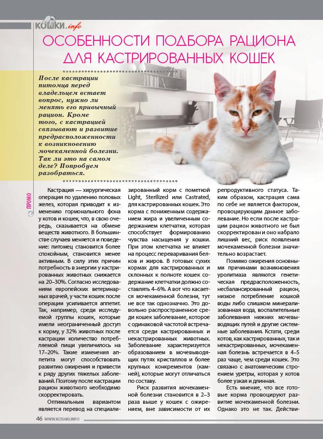 """Злокачественные опухоли у собак - лимфома, саркома, меланома, другие виды рака у собак. симптомы и лечение ветклиника """"зоостатус"""""""
