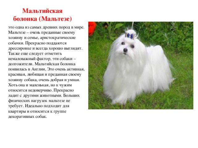 Топ-20 – декоративные собаки: породы с названиями и фото