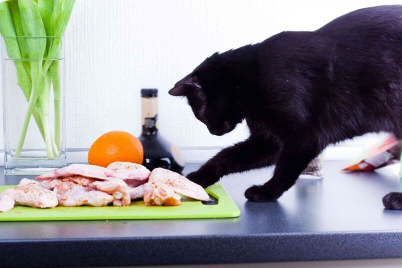 Чем опасно подкармливание собаки со стола